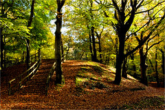 . (atsjebosma) Tags: autumn colours light steps trees kleuren herfst bos wood bomen treden november atsjebosma 2019 bergenaanzee natuurvriendenhuis coth5