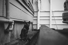 猫 (fumi*23) Tags: ilce7rm3 sony sel55f18z 55mm feline sonnar sonnartfe55mmf18za a7r3 animal alley bw monochrome blackandwhite bnw cat chat gato neko kitten ねこ 猫 ソニー モノクロ