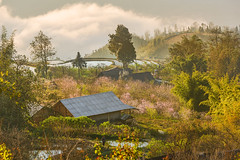 _Y2U1229.0313.Sap Pả.Sapa.Lào Cai (hoanglongphoto) Tags: asia asian vietnam northvietnam northwestvietnam northernvietnam landscape scenery vietnamlandscape vietnamscenery sapalandscape sapascenery spring springinsapa village house morning sunny morningsunshine sunnymorning sky clouds trees canon canoneos1dx canonef70200mmf28lisiiusm tâybắc làocai sapa sapả phongcảnh phongcảnhsapa mùaxuân sapamùaxuân buổisáng nắngsớm nắng bảnlàng cây ngôinhà bầutrời mây hoađào