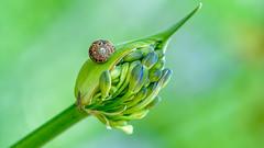 thankful for everything (LightInThisWorld) Tags: d7200 nikon nikond7200 flower thanksgiving thanksgiving2019 green nature bud bugs snail cricket bokeh