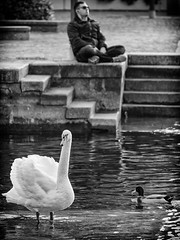Swan and nap (Riccardo Palazzani - Italy) Tags: iseo lago swan man nap duck water sleeping harbour italy bird nature