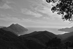 La nature des choses (Franck's) Tags: blackwhite corse mer noiretblanc sea