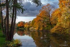 Couleurs de saison (Pascale_seg) Tags: paysage landscape nature natura automne autumn autunno arbre tree albero étang river riverscape moselle lorraine france nikon orange lago