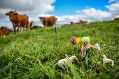 Parajes de Cantabria (dcdc887) Tags: españa animales animals vaca cow toy juguete nature naturaleza hierba grass cielo sky