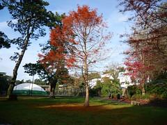 five autumn views (auroradawn61) Tags: bournemouthgardens autumn fall leaves trees bournemouth dorset uk england november 2019 lumixgx80 autumncolours