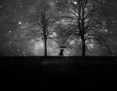 head in the stars (Fan.D & Dav.C Photgraphy) Tags: tree nature landscape sunset dawn outdoors silhouette black and white fog tranquil scene backlit wood shadow winter beauty in blackandwhite mystery bnwmystery stars