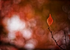 Autumn love (Mister Blur) Tags: petit montrouge paris parc montsouris autumn automne otoño fall leaves leaf bokeh love shallow depthoffield dof profundidaddecampo distanciafocal nikon d7100 50mm nikkor lens snapseed deathcabforcutie rubén rodrigo fotografía elitegalleryaoi bestcapturesaoi aoi
