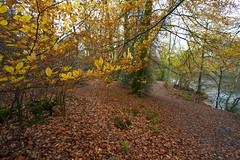 Autumn Colours @ Waggoners Wells.. (Adam Swaine) Tags: leaves trees autumn autumncolours autumnviews beautiful yellow woodland woodlandfloor naturelovers nature nationaltrust naturesfinest adamswaine 2019 hants uk ukcounties counties countryside county england english britain british canon seasons moss