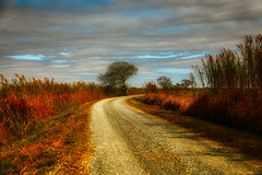 The Old Country Road (Bombatron) Tags: old country road bird sanctuary lake charles louisiana usa canon explore flickr 24 105l