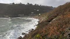 Cornwall: Lamorna Cove. 26/11/2019 (Peter M Greenwood) Tags: lamornacove lamorna cove