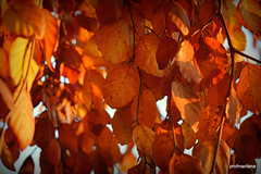 2019-11-282 that warm feeling (profmarilena) Tags: profmarilena goldenleaves autumn artwork