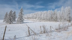 Anything in excess is most exhilarating (Tracey Rennie) Tags: snow winter trees fence archive alberta cold jean anouilh
