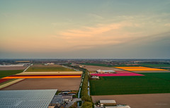 Patches of Flowers. (Alex-de-Haas) Tags: dji dutch eenigenburg europa europe fc6310 holland krabbendam nederland nederlands netherlands noordholland p4p phantom phantom4 phantom4pro westfrisia westfriesland aerial aerialphotography agriculture akkerbouw beautiful beauty bloemen bloemenvelden boerenland bollenvelden bulbfieldsflowerfields farmland farming flowers landbouw landscape landscapephotography landschaft landschap landschapsfotografie lente lucht luchtfotografie mooi polder pracht quadcopter schoonheid skies sky spring sundown sunset tulip tulips tulp tulpen zonsondergang warmenhuizen northholland