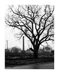 Leaving Eden (4Rider) Tags: warmia północ north landscape krajobraz pejzaż photoartist drzewo drzewa tree trees las forest poems poetry