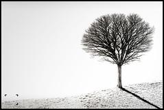 L'arbre (reko22) Tags: nb arbre nature fabuleuse