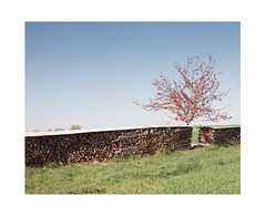 Kind of Fency (Thomas Listl) Tags: thomaslistl color steinenbronn field fields hff fence fencedfriday tree red romantic romanticsolitude wood grass green blue sky nature landscape rural countryside bright leaves
