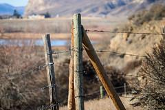 Forbidden Lands -- HFF (Jessie T*) Tags: kamloopsbc tranquille wintersunshine fenceposts barbedwire dof tbsanatorium