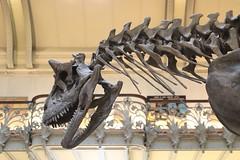 Carnotaurus sastrei (just.Luc) Tags: skeleton skelet dinosaur dinosaure dinosaurus parijs parigi paris îledefrance france frankrijk frankreich francia frança europa europe paleontologie paleontology paléontologie