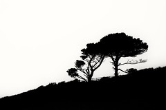 Skyline (phileveratt) Tags: fencefriday fencedfriday happyfencefriday hff blackwhite monochrome