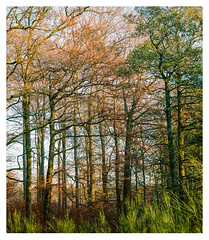 Late autumn forest, Kell am See (Germany) (werner-marx) Tags: analog film meinfilmlab mediumformat agfaisoletteiii solinar kodakportra160 kellamsee forest autumnforest autumn