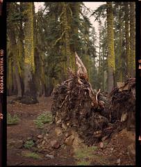 mt shasta on 120 film (Garrett Meyers) Tags: garrettmeyers film filmphotographer mtshasta shasta kodakfilm kodak kodakportra160 portra160 trrees forest mountains mountain mountshasta northerncalifornia