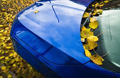 Hay que demostrar que los buenos somos más. (Elena m.d. 12.7M views.) Tags: car leaf leaves yelow blue reflections colors autumn nikon d5600 tokina1116 tokina