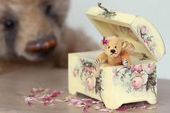 Not guilty! (hehaden) Tags: bear teddybear miniature box roses floral petals watchingmacro lookingcloseonfriday sel90m28g