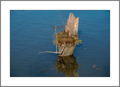 Ich werde eine Insel (I will be an island) (alfred.hausberger) Tags: baumstumpf insel inn wernstein minimalismus