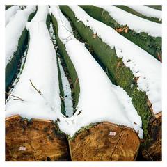 Late autumn, first snow, Kell am See (Germany) (werner-marx) Tags: analog film meinfilmlab mediumformat agfaisoletteiii solinar kodakportra160 kellamsee forest autumnforest autumn fallentrees