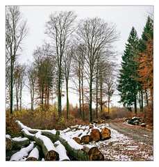 Late autumn, first snow, Kell am See (Germany) (werner-marx) Tags: analog film meinfilmlab mediumformat agfaisoletteiii solinar kodakportra160 kellamsee forest autumnforest autumn