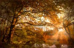 Autumn (Jean-Michel Priaux) Tags: paysage nature landscape forest trees tree rhin rhein ried alsace france paint painting sun sunset colors autumn priaux luminar