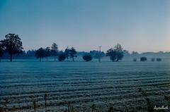 just before the sun wakes up (.D..B.) Tags: zenit mir1 kodak ultramax film landscape sunrise morning germany niederrhein nrw 12xps trees dawn