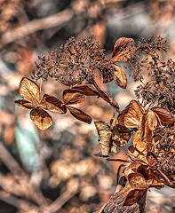 (nrhodesphotos(the_eye_of_the_moment)) Tags: dsc11393001084 wwwflickrcomphotostheeyeofthemoment theyeofthemoment21gmailcom bokeh plantlife nature outdoors flowers stem autumn2019