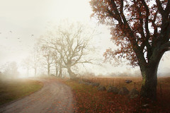 November day (Birgitta Sjostedt) Tags: landscape fog haze road dirty tree leaves autumn stone