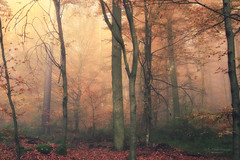 Trees (Rita Eberle-Wessner) Tags: forest wald woods woodland laubwald leaves buchen beeches trees bäume herbst herbstwald autumn fall zauberwald waldmagie licht light fog nebel mist nebelwald odenwald