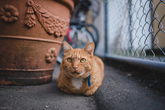 猫 (fumi*23) Tags: ilce7rm3 sony sel35f18f emount 35mm fe35mmf18 a7r3 animal alley cat chat gato neko katze bokeh depthoffield dof ねこ 猫 ソニー