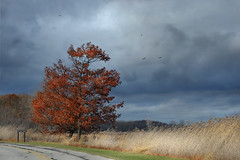 Driving Through the Park (ms smartipants) Tags: stormclouds sky park fall tree lakeeriemetropark huronclintonmetroparks