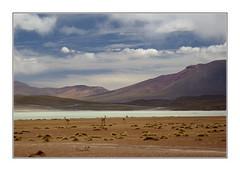 Altiplano bolivien (PtiteArvine) Tags: altiplano montagnes laguna bolivie amériquedusud paysage ciel nuages