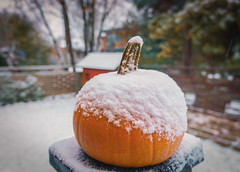 Pumpkin news ! (@magda627) Tags: autumn coth5 color winter nature pumpkin outdoor fall orange snow garden trees edit anteketborkacom white evening sony lightroom detail