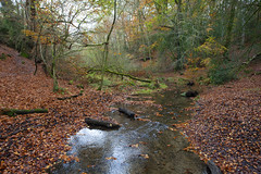 Woodland Stream ..Hants (Adam Swaine) Tags: autumn autumncolours autumnviews streams water woodland woodlandfloor waterside waterways england english britain british trees leaves uk ukcounties counties countryside naturelovers nature nationaltrust beautiful canon seasons adamswaine 2019 beeches