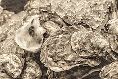 """""""The World Is My Oyster"""" (Fisher Island Oysters) (nrhodesphotos(the_eye_of_the_moment)) Tags: 10dsc09333001084 wwwflickrcomphotostheeyeofthemoment theyeofthemoment21gmailcom fisherislandoyster food delicacy natureanythinggoes"""