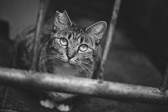 猫 (fumi*23) Tags: ilce7rm3 sony sigma sigma70mmf28dgmacro 70mm emount a7r3 animal alley feline cat chat gato katze monochrome bw bnw blackandwhite ねこ 猫 ソニー シグマ