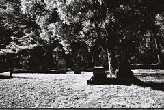 Cemetery (goodfella2459) Tags: nikonf4 afnikkor24mmf28dlens rolleiinfrared400 35mm blackandwhite film analog cemetery tombstones graves southernhighlands newsouthwales filter infrared hoyar72infraredfilter lensfiltersgroup bwfp