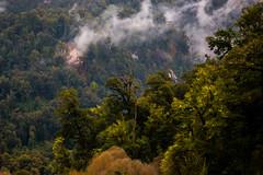 Bosque encantado (José Rambaud) Tags: peulla andes andesrange chile patagonia loslagos arbol arboles tree travel clouds cloudscape forest bosque mountains mountain montañas montaña