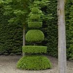 89i Барочная стрижка кустов Версальского парка