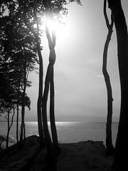 black coast (Darek Drapala) Tags: baltic black bw blackwhite blackandwhite nature trees panasonic polska poland panasonicg5 forest evening sun sky silhouette sunset skyskape sea seashore seascape reflection reflects lumix light