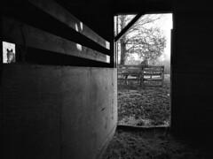 Efland (F. Neil S.) Tags: horse stall barn fence blackwhite blancetnoir monochrome 35mmfilm negative ilfordfp4 caffenolcl selfdev nikonf6 nikonafsnikkor2485mmedvr