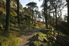 MiddleWay (Tony Tooth) Tags: nikon d7100 sigma 1750mm path pathway footpath woods woodland pines trees theroaches upperhulme staffs staffordshire staffordshiremoorlands england