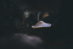 Black Friday Mushroom (micke.vmix) Tags: carlzeiss zeiss d850 makroplanar1002zf makroplanart2100 mushroom