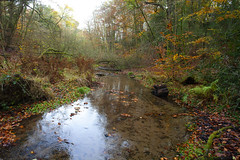"""""""Leaves in the Stream"""" (Adam Swaine) Tags: streams water naturelovers nature nationaltrust naturesfinest trees autumn autumncolours autumnviews canon leaves woodland woodlandfloor uk ukcounties counties countryside rural hants county seasons adamswaine 2019 beautiful britain british"""